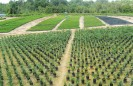 perkebunan-sawit-09